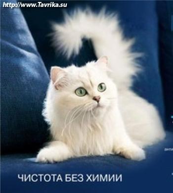 """Магазин """"Белый кот"""""""
