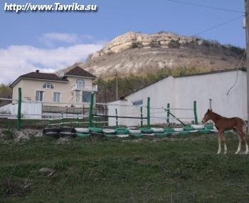 """Конный клуб """"Надежда"""""""