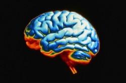 Мозг человека достиг предела своих возможностей - британский ученый