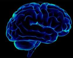 Во время диеты мозг поглощает собственные клетки