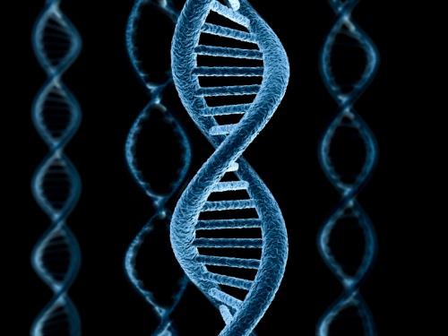 Ученые открыли практически все секреты ДНК