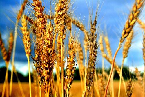 НСЗ о повышении эффективности регулирования зернового рынка