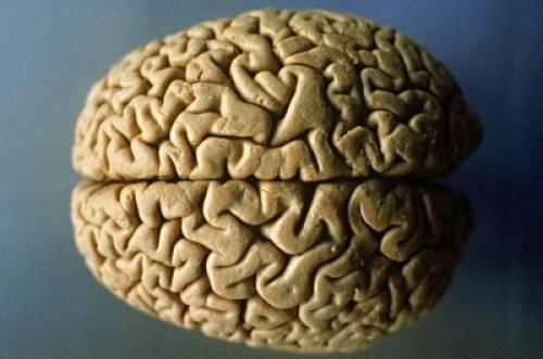 Ученые создали 3D мозг человека