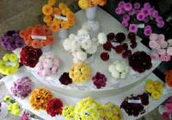 Столичный ботсад приглашает на выставку цветов