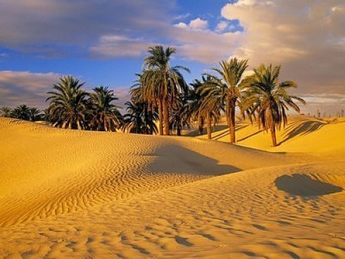Ученые нашли подтверждение тому, что 100 тысяч лет назад Сахара была цветущем раем на земле