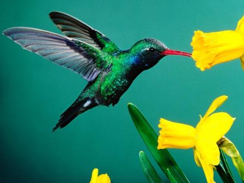 Раскрыты секреты птичьего полета