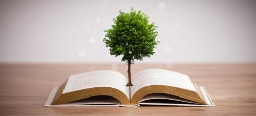 Генетики вывели новый сорт деревьев для изготовления бумаги и биотоплива