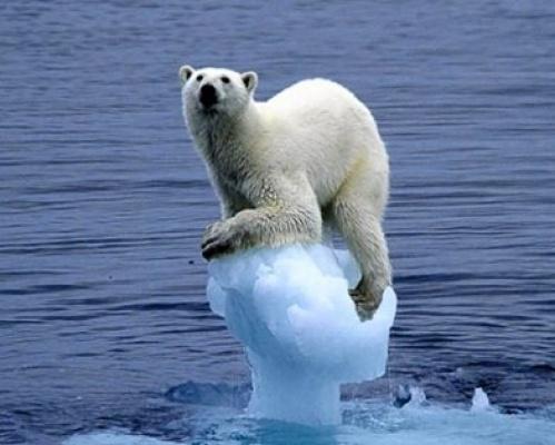 Таяние ледников в западной Антарктике достигло точки невозврата