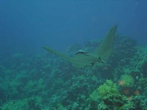 Ученые нашли жизнь под дном Тихого океана