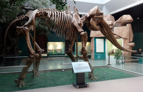 В Китае найдены останки древнего родственника слона