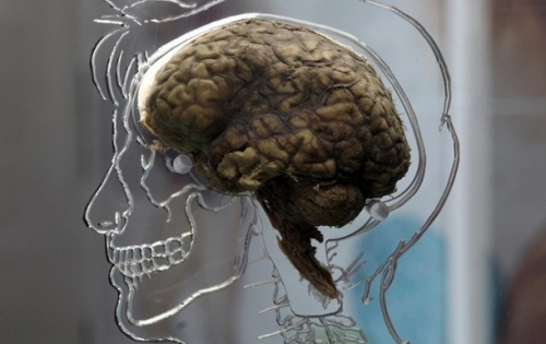 """Ученые объяснили, почему """"мужской"""" мозг зарабатывает больше"""