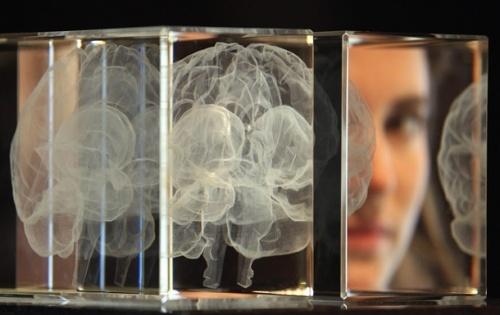 Память человека в десять раз больше, чем считалось - ученые