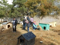 Учащиеся евпаторийских школ запустили эстафету помощи животным
