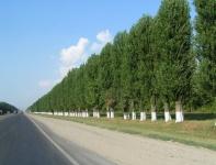 Озеленители высадят в следующем году в Керчи деревья в рамках компенсационной программы Крымского моста