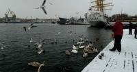На Графской пристани поселились лебеди