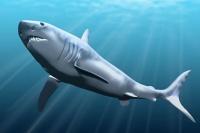 Найдена новая причина вымирания гигантских акул-убийц