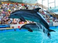 Евпаторийский дельфинарий запускает новый формат