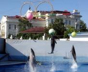 В Севастополе идёт сбор подписей за спасение Дельфинария в Артбухте