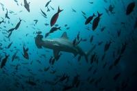 Ученые заметили катастрофическое снижение уровня кислорода в Мировом океане