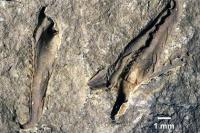 В канадском музее нашли гигантского вымершего червя