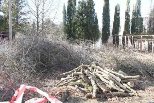 В Севастополе незаконно вырубили полсотни деревьев в детском саду