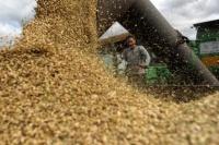 В Крыму наблюдается рост засоренности экспортных партий зерна
