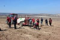 В Севастополе применили мировой опыт закладки винограда