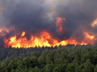 В Крыму определили начало пожароопасного периода
