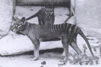 В Австралии заметили вымершее животное