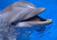 Севастопольский дельфинарий откроется в конце апреля