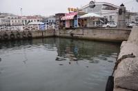 Цветные пятна в море в Севастополе оказались безвредными