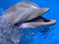Расположенные в Алуште дельфинарии будут проводить сеансы дельфинотерапии с детьми-инвалидами