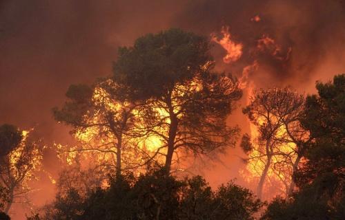 Севастопольские спасатели учились бороться с крупным лесным пожаром