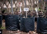 Около 800 деревьев были посажены в Севастополе впервые за многие годы