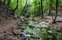 Минэкологии Крыма планирует создать лесной питомник для диких животных