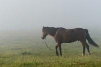 Раскрыто происхождение домашних лошадей