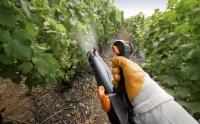 В Ялте на виноградниках проходит химическая обработка, посещение территорий строго запрещено