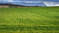 В Крыму насчитали 1,8 млн га сельхозземель