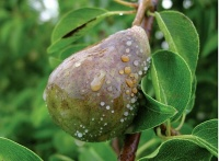Холодная весна в Крыму уничтожила в некоторых районах до 90% плодовых культур