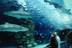 В киевском зоопарке построят океанариум