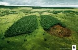 Человечество за 40 лет уничтожило более четверти биоресурсов Земли