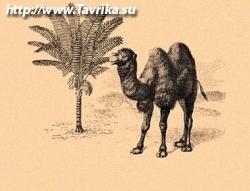 """Отель """"У верблюжьих горбов"""""""
